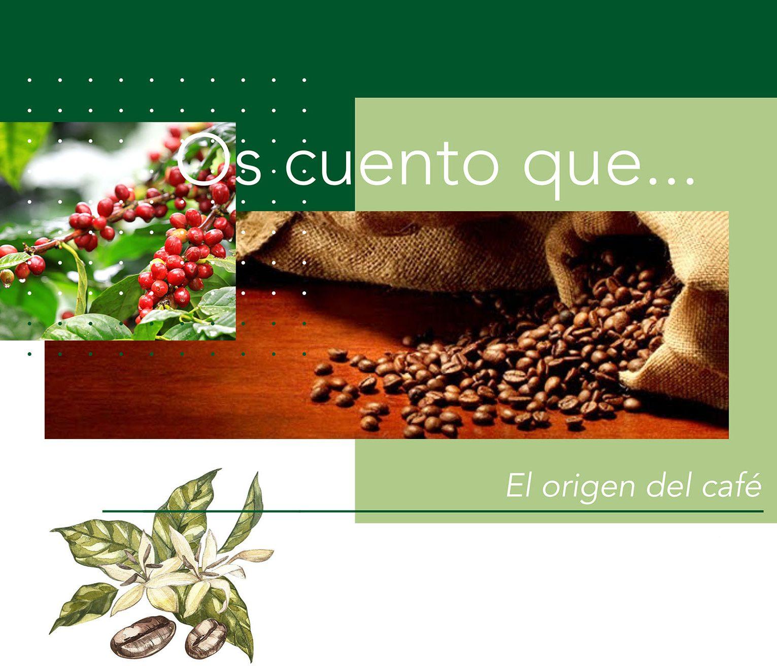 blog - cafe de especialidad